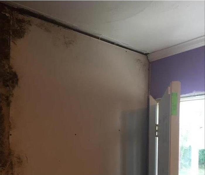 Mold Remediation Mold Overview