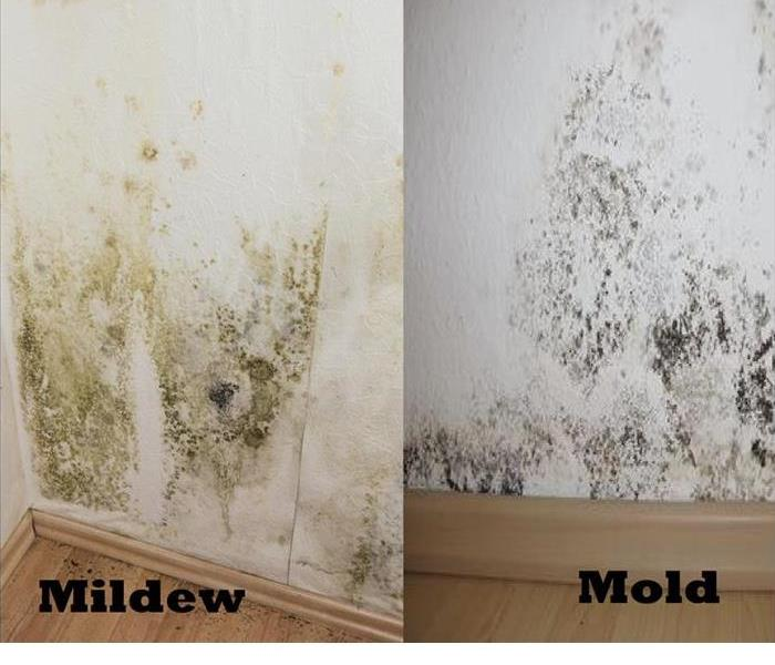 Mold or Mildew in Commercial Property
