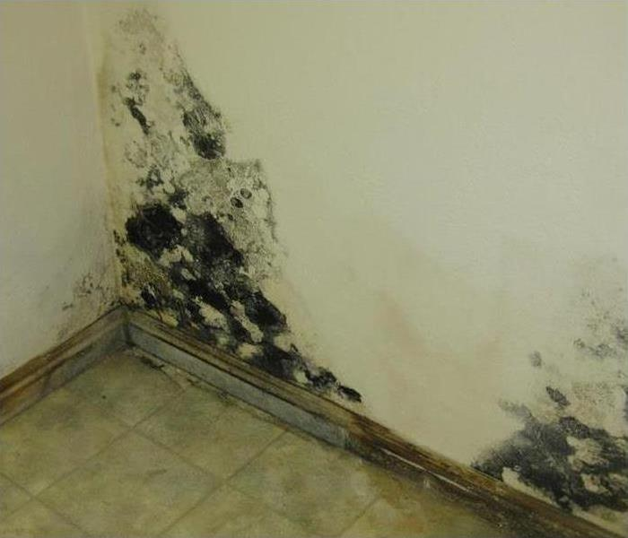 Mold Remediation Call the Mold Professionals at SERVPRO of Portsmouth 2018